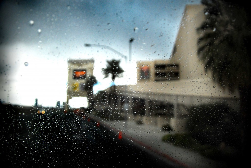 Rainy Day Las Vegas photo of palm trees in Nevada.
