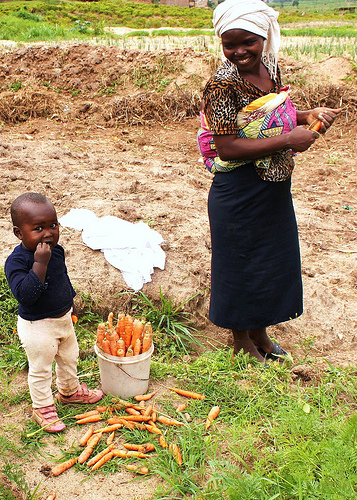 Mother and child harvesting carrots in Africa.