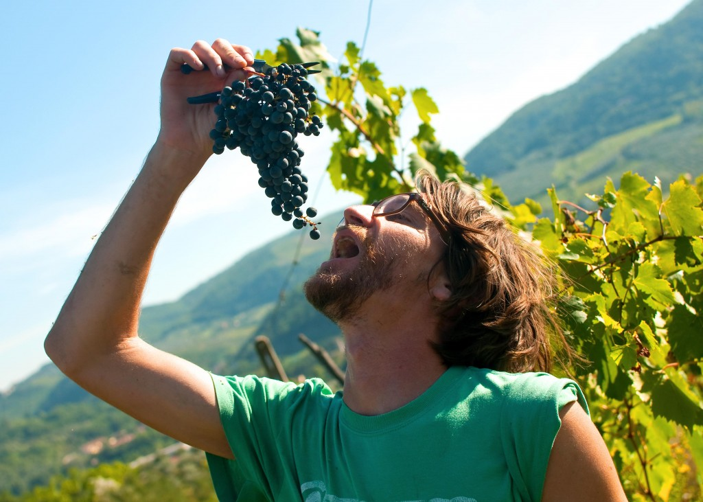 Randy Kalp eating grapes in a Tuscan vineyard.