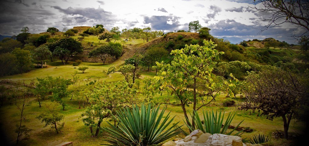 A variety of trees and plant life from Mount Alban in Oaxaca, Mexico.