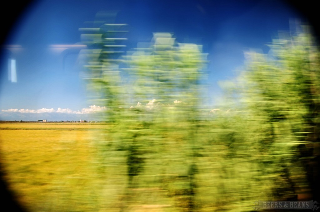 Italian countryside 7 smallerforBnB 1024x680 My Arrival To Italy   Scenes From An Italian Train