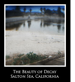 The Beauty of Decay Photo Essays
