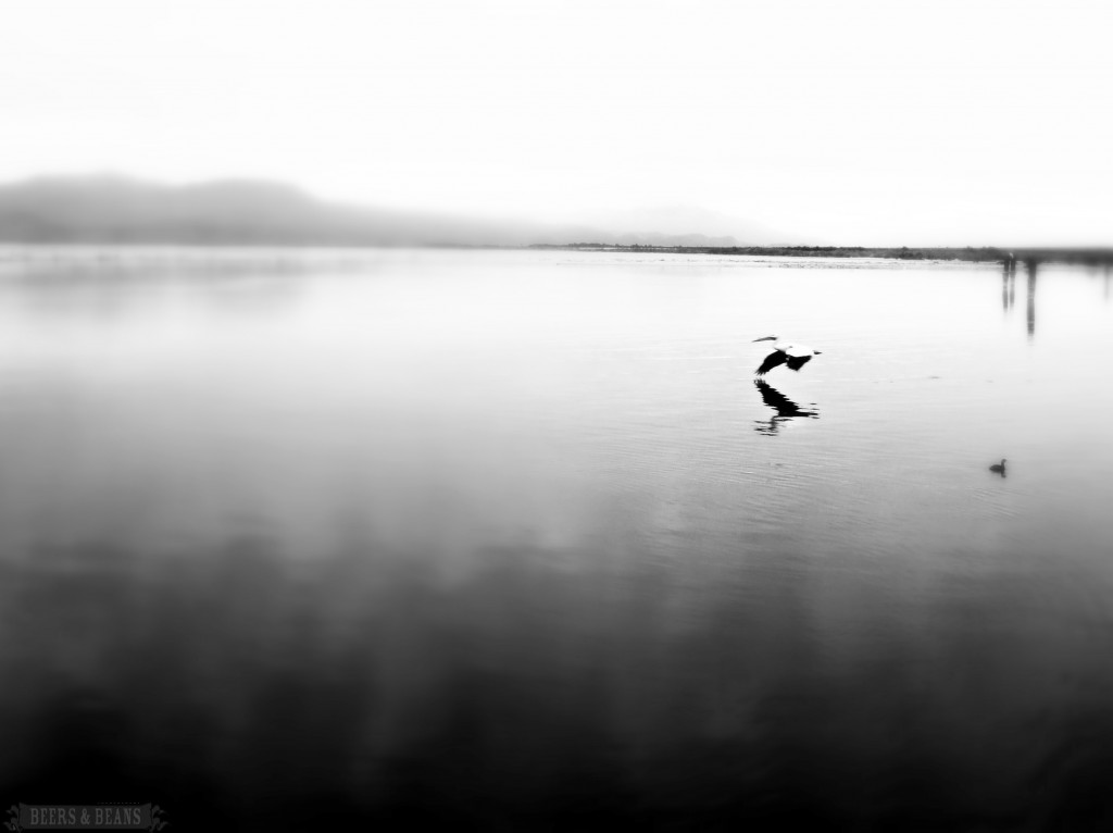 A seagull flying over the Salton Sea in California.