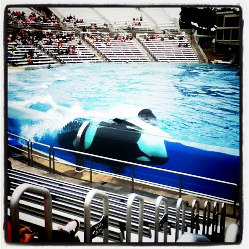 Shamu at Sea World in San Diego, California.