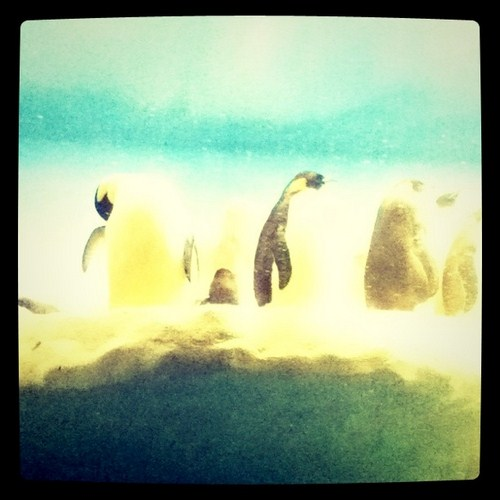 Penguins at Sea World in San Diego.