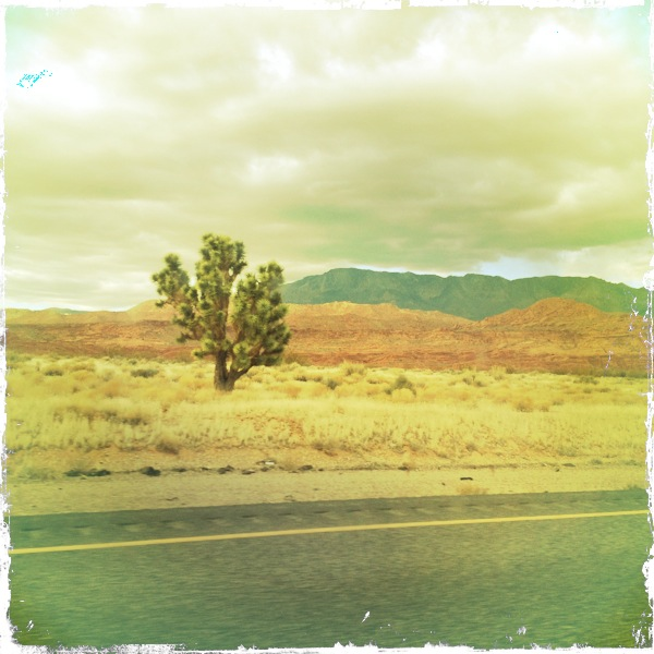 A cactus along Interstate 15 in Nevada.