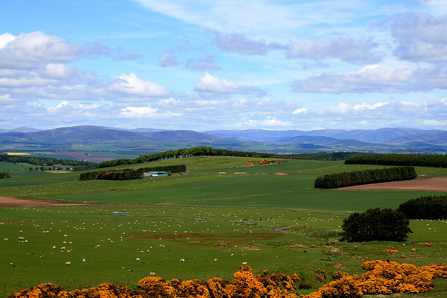 The green fields of Scotland.