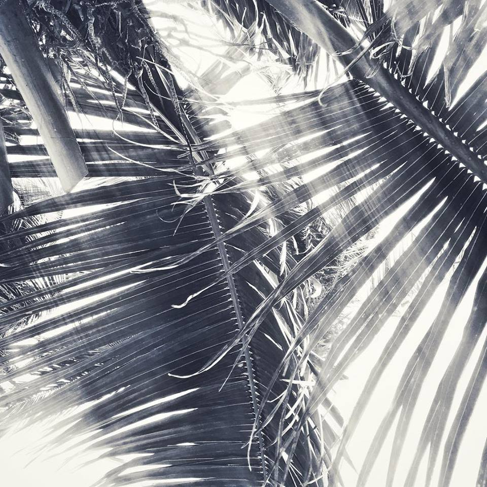 Palm Leaves on Caye Caulker, Belize.