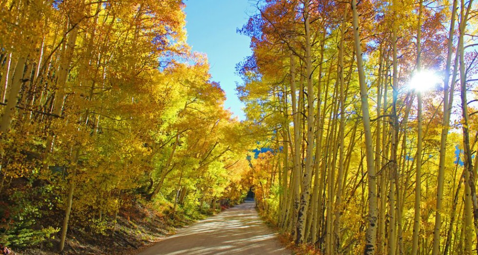 A mountain road in Breckenridge, Colorado, covered in fall foliage.