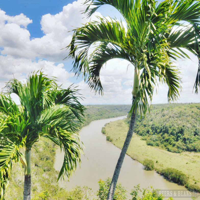 Palm trees at at Altos de Chavón in La Romana, Dominican Republic.