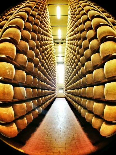 The sacred halls of the Parmigiano-Reggiano Consortium in Parma, Italy.