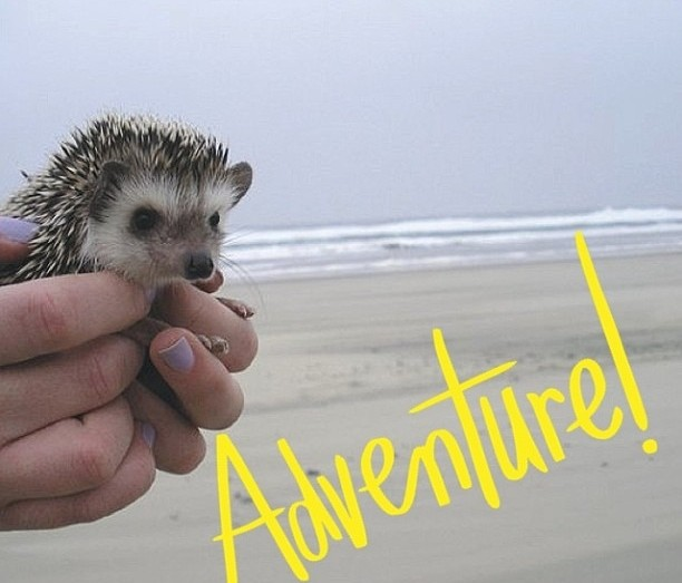 What do Scarves, Italy and an Oregonian Hedgehog Have In Common?