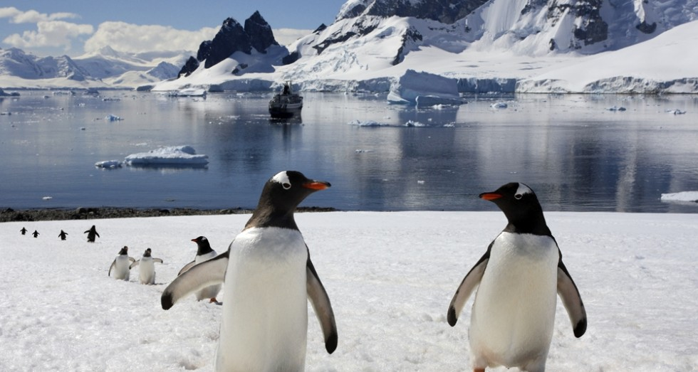 Penguins in Antarctica.