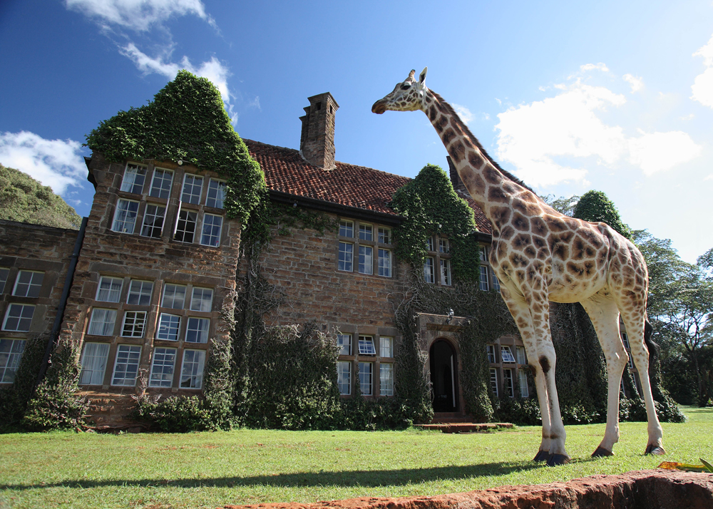 A Giraffe hanging outside of Giraffe manor.