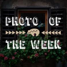 photo of the week 5