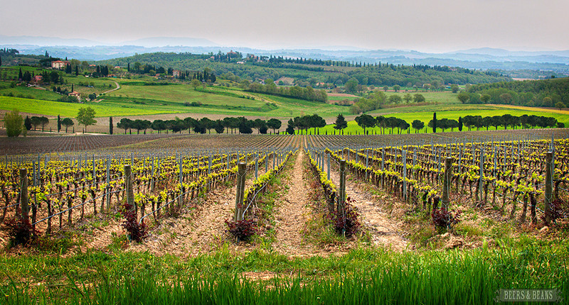 Tuscany Vineyard in Spring.